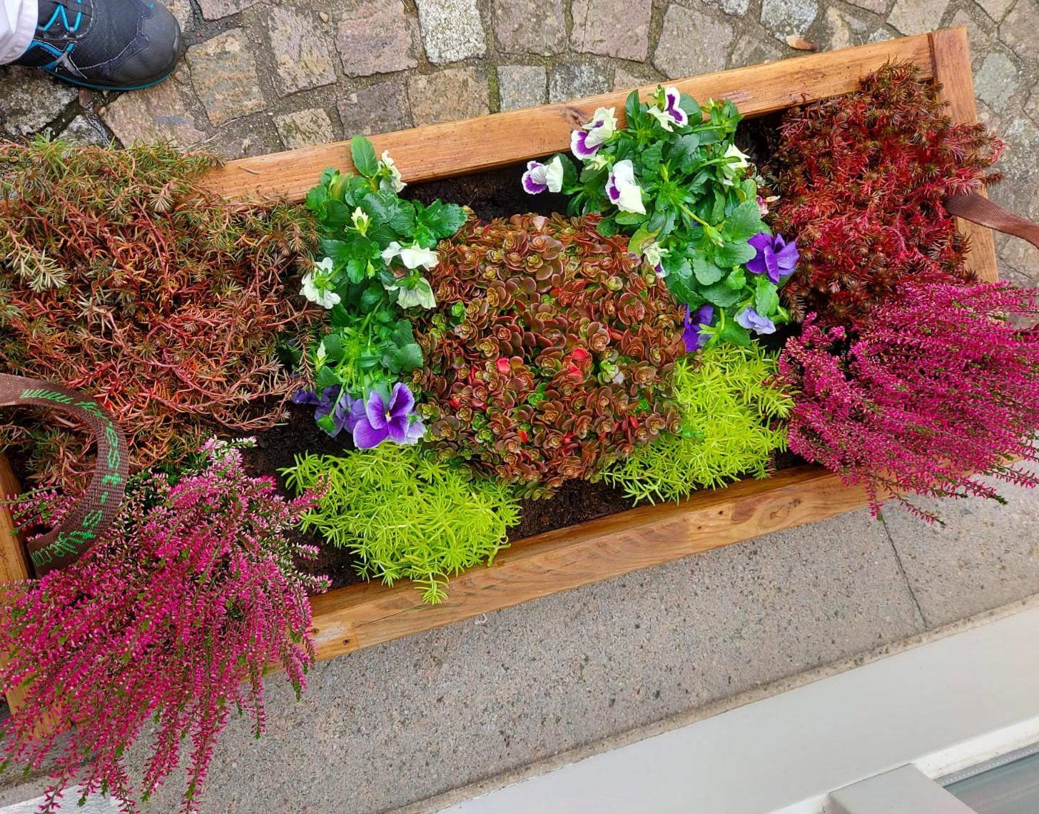 Neuer Blumenkasten im Stephanus-Haus. Gemeinsam von der Tagespflege bepflanzt